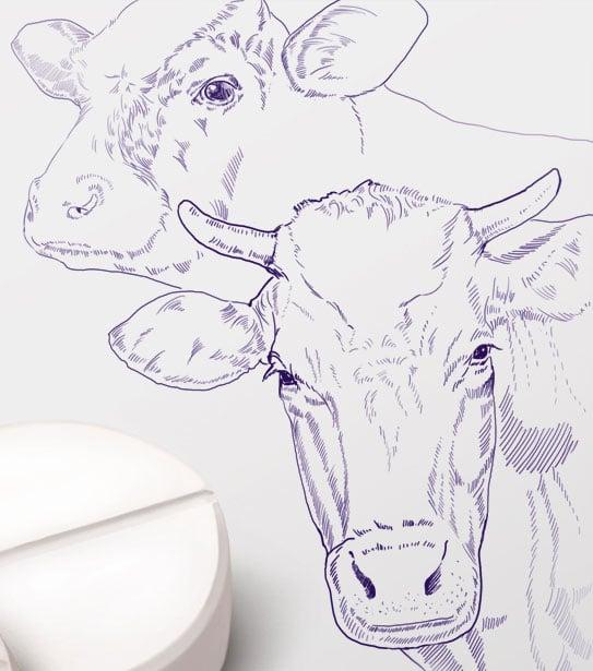 иллюстрации животных графика – Новости студии дизайна «Aedus Design»