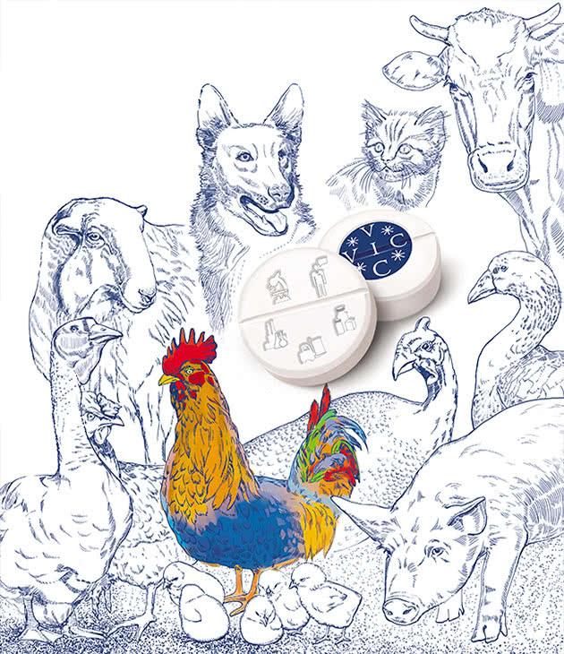 Иллюстрация для каталога ГК «ВИК» в разделе «Иллюстрации» портфолио дизайн-студии «Aedus Design»