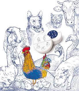 Иллюстрация для каталога ГК «ВИК»